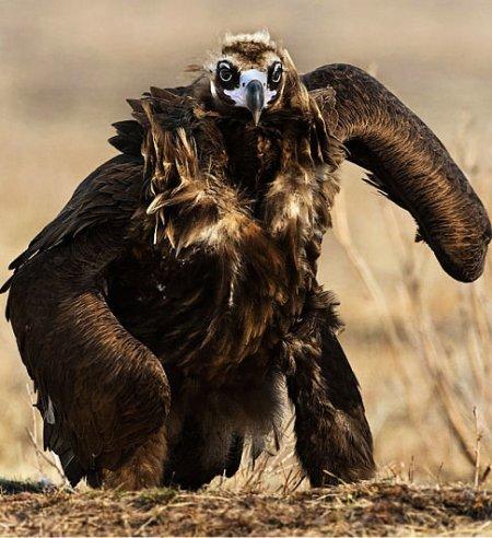 eaglewarrior